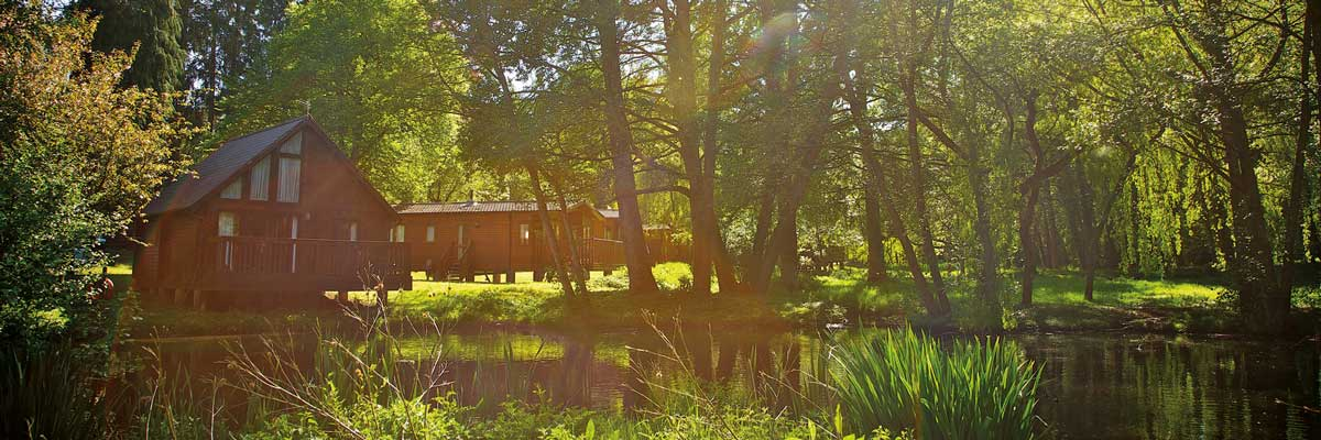 Wood cabins around a pond at Whitemead Forest Park